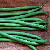 Maxibel Bush Beans BN84-50_Base