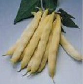 Romano Gold Bush Beans BN72-50_Base