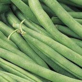 Tenderette Bush Beans BN45-50_Base