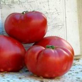 Aker's West Virginia Tomato TM313-20_Base