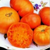 Amana Orange Tomato TM2-20_Base
