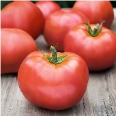 Atkinson Tomato TM419-20_Base