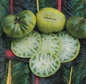 Aunt Ruby's German Green Tomato TM6-20_Base