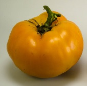 Aunt Gertie's Gold Tomato TM723-20_Base