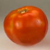 Big Boy Tomato TM775-10