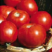Basket Vee Tomato TM350-20_Base