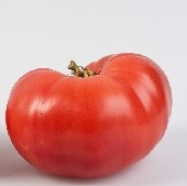 Beauty Tomato TM468-20_Base