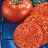 Beefmaster Tomato TM8-20_Base