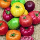 Beefsteak Rainbow Mix Tomato TM493-20_Base