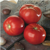 Bella Rosa Tomato TM478-10_Base