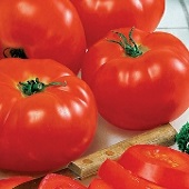 Big Beef Tomato TM11-10_Base