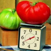 Big Zac Tomato TM228-10_Base