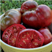 Black Krim Tomato TM14-20_Base