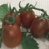 Black Plum Tomato TM15-20_Base