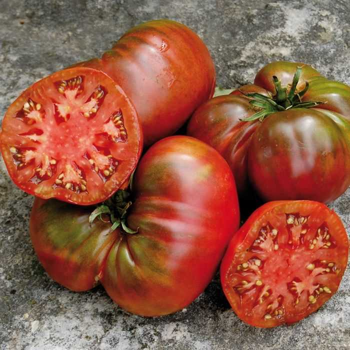 Black Sea Man Tomato TM399-20_Base