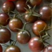 Black Cherry Tomato TM328-20