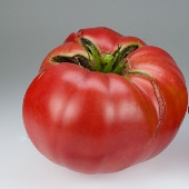 Boondocks Tomato TM699-10_Base