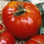 Brandywine Tomato (Landis Valley Strain) TM238-20_Base