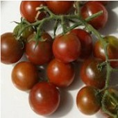 Brown Berry Tomato TM288-20_Base