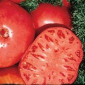 Brandywine Tomato (Red Regular Leaf) TM21-20_Base