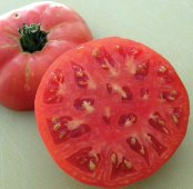Brandywine Tomato (Sudduth Strain) TM225-20_Base
