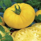 Beefsteak Tomato (Yellow) TM742-20_Base