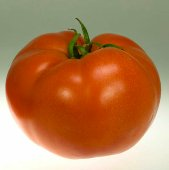 Campbell 1327 Tomato TM27-10_Base