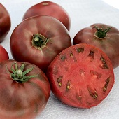Carbon Tomato TM241-20_Base