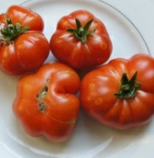 Ceylon Tomato TM670-10_Base