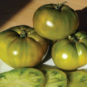 Cherokee Green Tomato TM761-20_Base