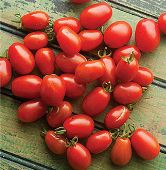 Cherry Roma Tomato TM549-20_Base
