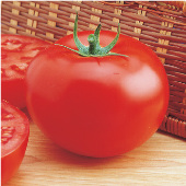 Delicious Tomato (Guinness Record Holder) TM41-20_Base