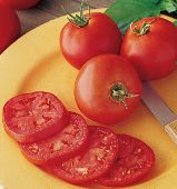 Druzba Tomato TM172-10_Base