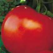 Equinox Tomato TM745-20_Base