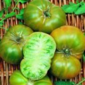 Evergreen Tomato TM44-20