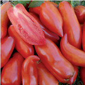 Federle Tomato TM231-20_Base