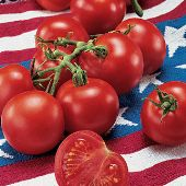 Fourth of July Tomato TM741-10