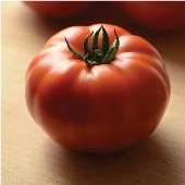 Genuwine Tomato TM788-10_Base