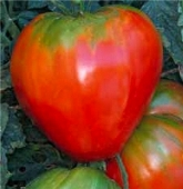 German Red Strawberry Tomato TM49-20