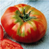German Head Tomato TM532-20_Base