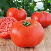 Glamour Tomato TM610-20_Base