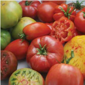 Gourmet Heirloom Blend Tomato TM747-10_Base