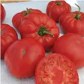 Granny Cantrell's German Tomato TM756-20_Base