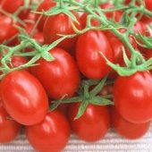Grapette Tomato TM286-20_Base