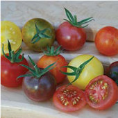 Heirloom Cherry Blend Tomato TM750-10_Base