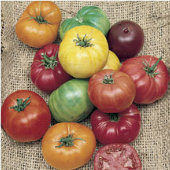 Heritage Rainbow Mix Tomato TM494-20_Base