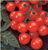 Husky Tomato (Cherry Red) TM65-20_Base