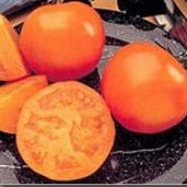 Greenhouse gardening 099 - Husky Tomato Husky Tomatoes Husky Pink Tomato Husky