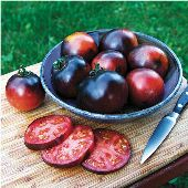 Indigo Apple Tomato TM779-10_Base