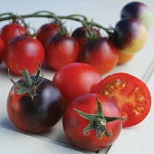 Indigo Cherry Drops Tomato TM782-10_Base